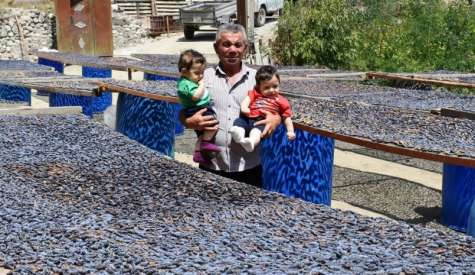HERE PRODUCTION OF DRIED FRUITS BECOMES A BUSINESS